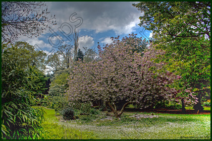 Blossom hdr 0986 
