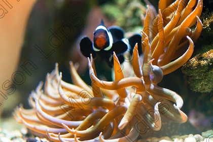 MG 1978Tropical Fish-2 
