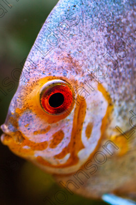 MG 1960-2 