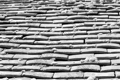 IMG 0205 HCBW 