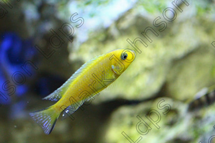 ProofedIMG 3210 