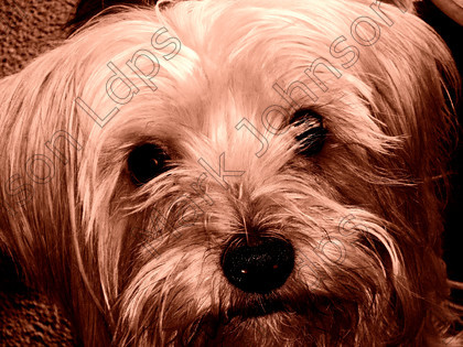 Gimp-1000057 selenium 