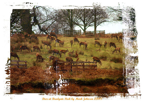 Deer at Bradgate park late winter