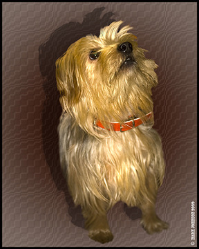 Published by DSLR User, a picture of Sally the Yorkie dog